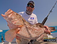 Grouper fishing with Hogy lures