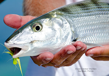 Bonefish caught in Key West, Florida with Dream Catcher Charters