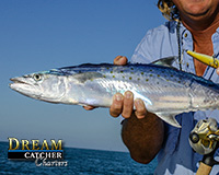 Spanish Mackerel Key West